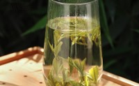 霍山黄芽属于什么茶?
