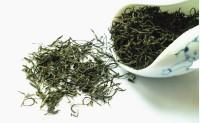 信阳毛尖属于什么茶?